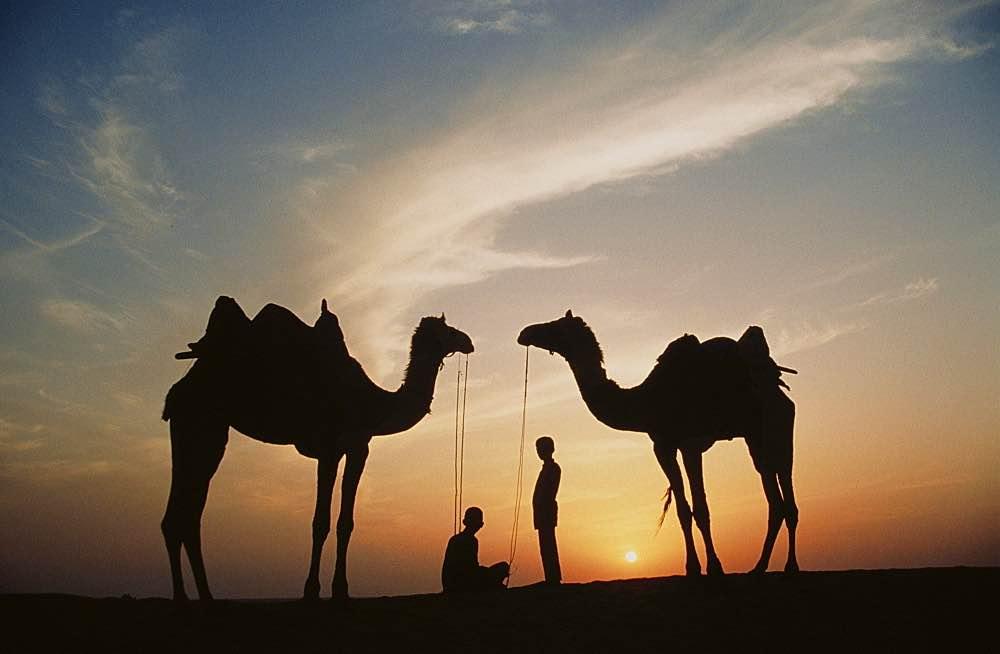 Desert-Morocco-camels